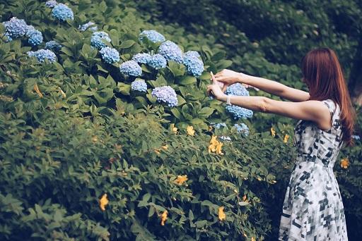 紫陽花の構図を取る女の子