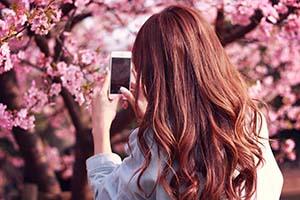 桜の写真をスマホで取る女の子