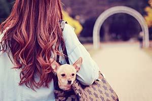 鞄に犬を入れておさんぽする女の子
