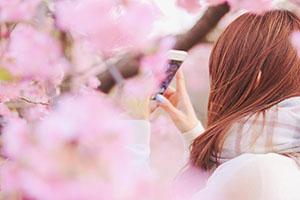 桜の木と女の子