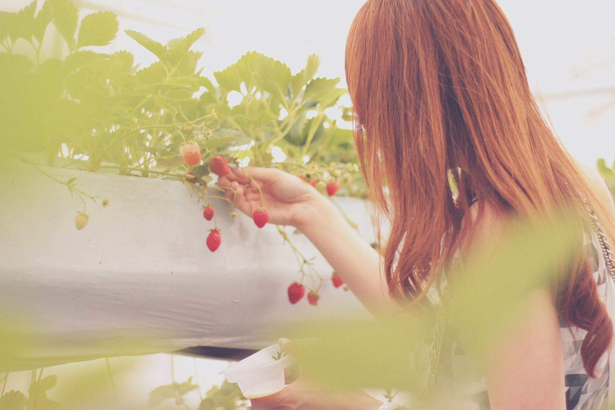 小さなイチゴと女の子