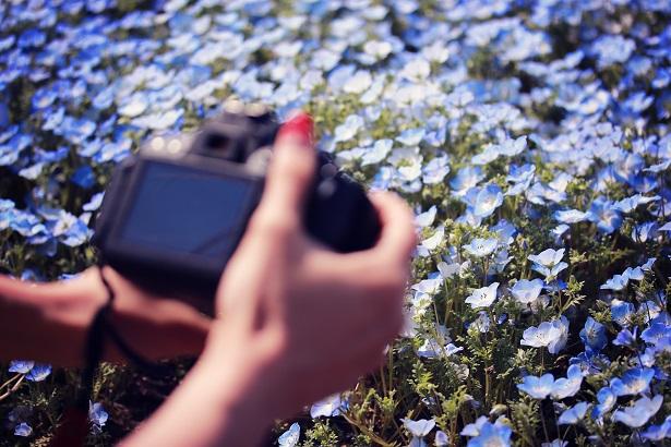 青い花を撮影する女の子